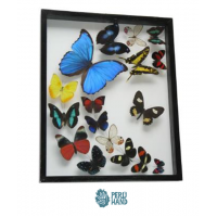 01 blue morpho butterfly + 16 different butterflies