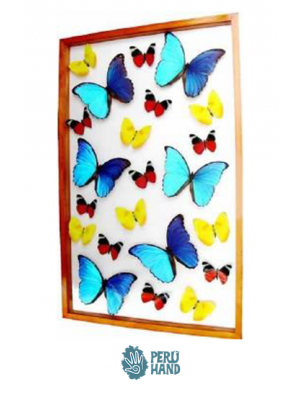 06 blue morpho butterflies + 16 different butterflies
