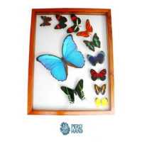 01 blue morpho butterfly + 10 different butterflies