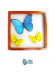 01 big blue butterfly + 02 yellow butterflies