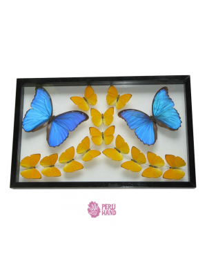 Real Butterflies Mounted